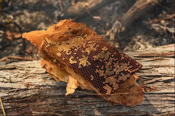 عسل های جنگلی زندو