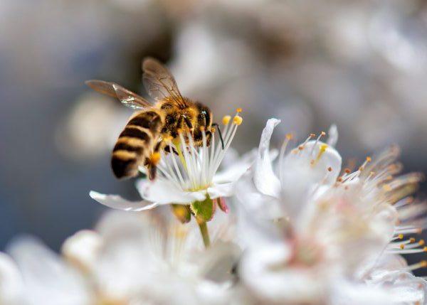 عسل بهاره زندو تهیه شده از گیاهان کوهستان