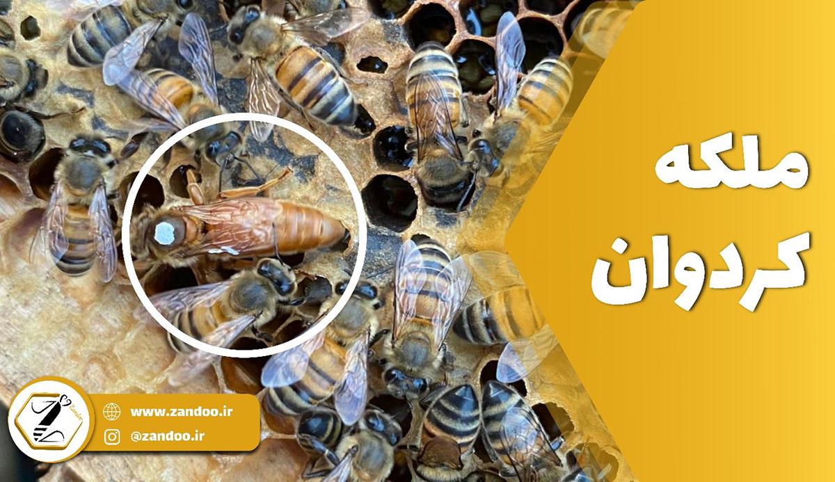ملکه کردوان زندو از ملکه های زنبور زندو است