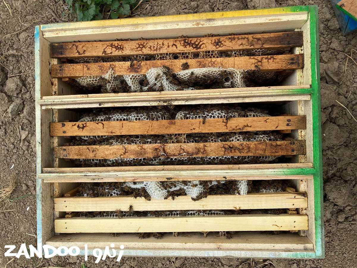 نمونهای از کندو زنبور عسل