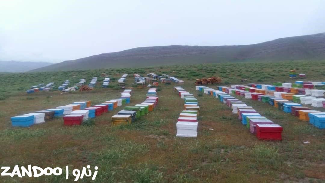 انواع کندوهای زنبور عسل در زنبورستان زندو