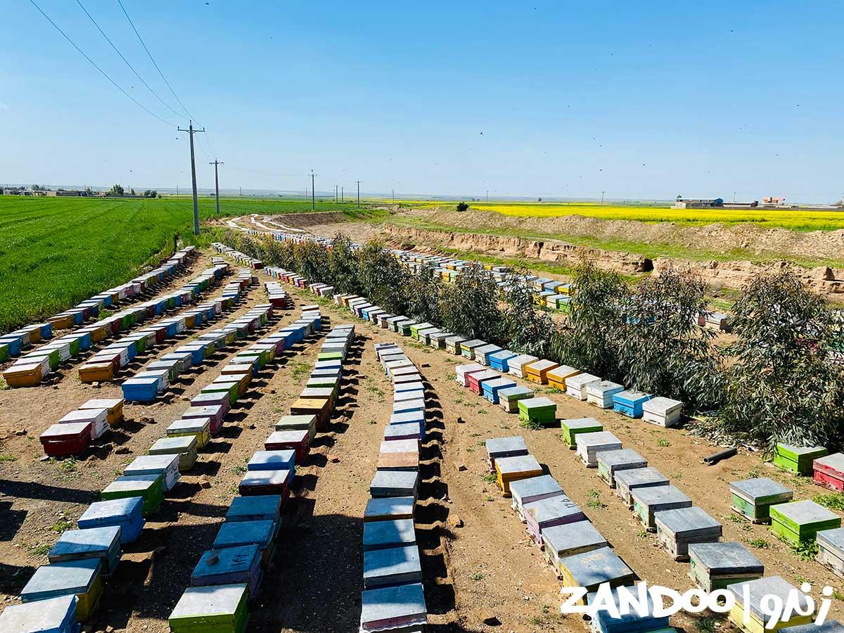 کندوهای تولید عسل چهل گیاه زنبورستان زندو